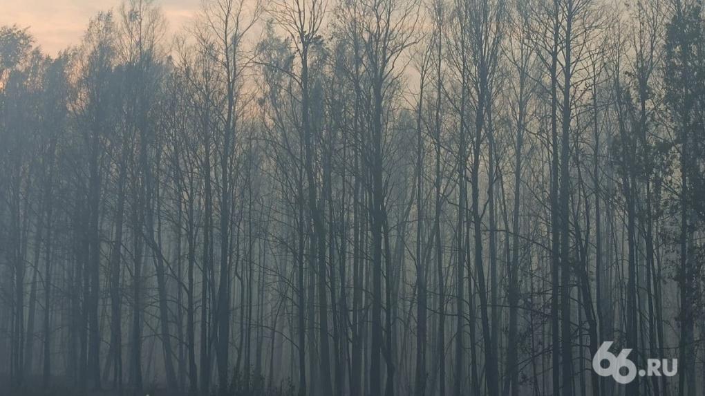 Пожарным, которые тушили леса в Свердловской области, выплатят премии
