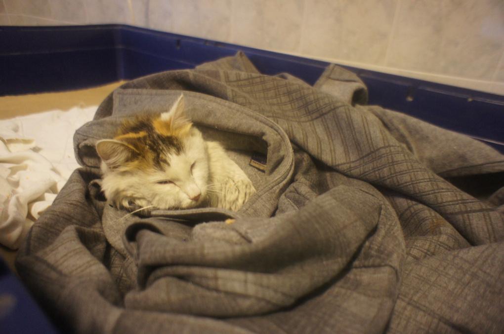 Читатели 66.ru помогли спасти пострадавшую в пожаре кошку Новость
